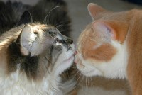 Don't worry, the cats who were at the Montgomery Animal Shelter are safe. Image from Flikr.com.