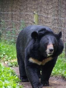 kelly ann walz black bear