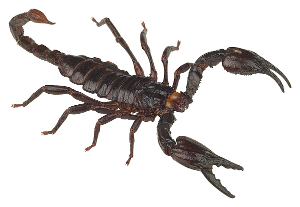 This debt relief has a sting to it? Try $39 million for a gallon of scorpion venom!