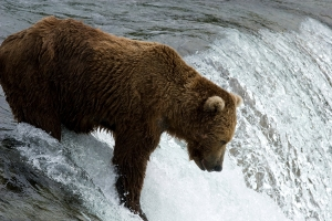 When it comes to making money, are you a patient bear… or something more impulsive? (Photo: flickr.com)