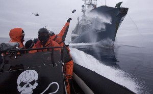 The whale wars between the Sea Shepherds and Japan's whaling fleet continue. The Ady Gil, a pursuit craft, was literally sawed in half by the Shonan Maru 2.